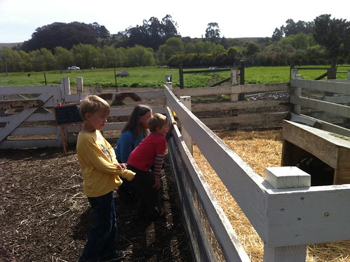 the boys with Aunt Liz, looking at the goats