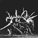 R.A.C.E. dance company by Valeriesphotography.com