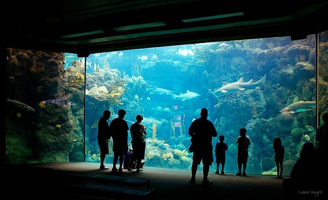 Florida Aquarium Tampa Fl Flickr Photo Sharing