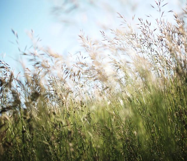 離離原上草,一歲一枯榮。