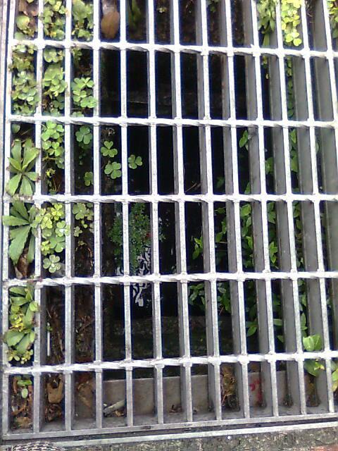 植物與排水溝蓋