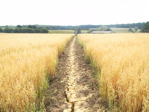 Through oats