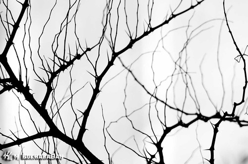 tree canon branch 10d mostafa درخت مصطفی شاخه کنون بخارائیان bokharaeian