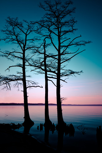 park trees sunset sky usa silhouette photography virginia three us still colorful noir unitedstates state unitedstatesofamerica plantation cypress hamptonroads tidewater chippokes skynoir