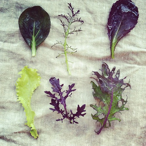 The prettiest greens, from our CSA