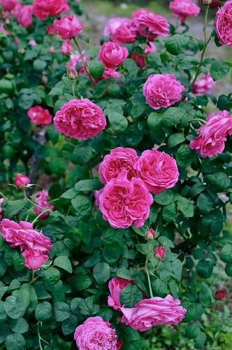 Flower Festival Commemorative Park