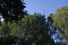 groen Haagse Bos