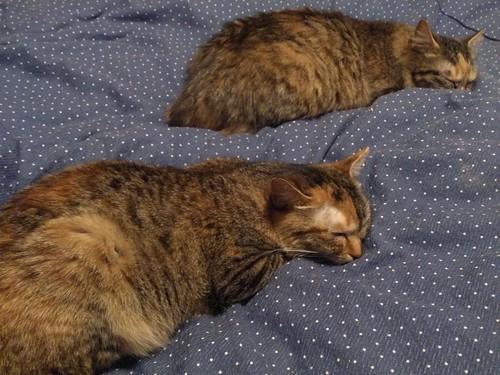 同じ格好で寝る姉妹 by Chinobu