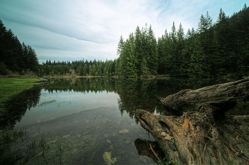 trees lake reflection britishcolumbia logs gordon mission ashby thechallengefactory gordeaupond