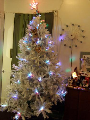gunhee-tree814