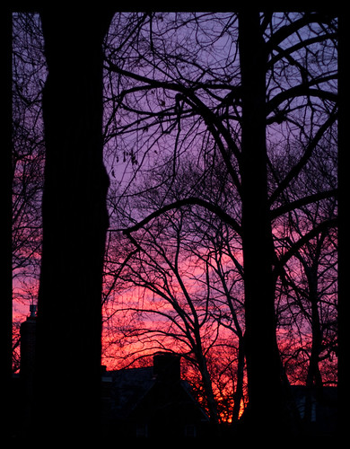 pink blue trees houses sky orange colors sunrise purple silhouettes glorious thankful 50mmf18 canoneos50d