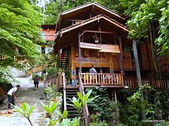 building, house, log cabin, tree house,