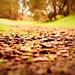 take my path by KJBehavior