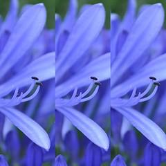 hyacinth(0.0), flower(1.0), herb(1.0), scilla(1.0), petal(1.0),