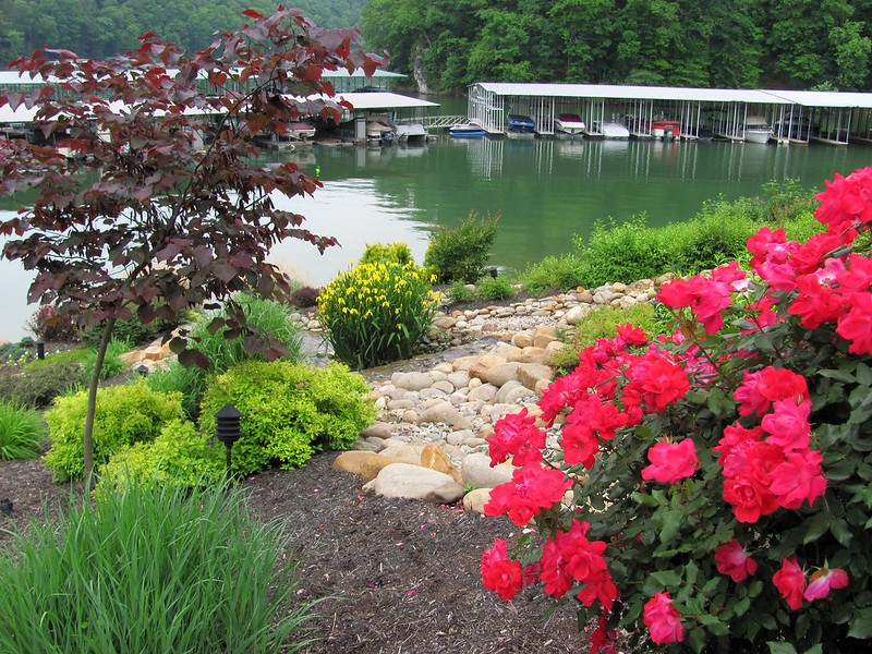 Norris Lake Tennesee Willows at Twin Cove Marina pick
