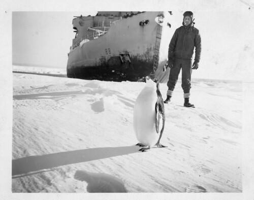 penguins antarcitc wildlife