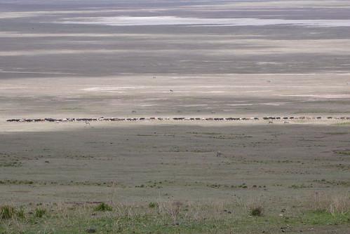 ンゴロンゴロ保全地域 タンザニア/ Ngorongoro Conservation Area, Tanzania