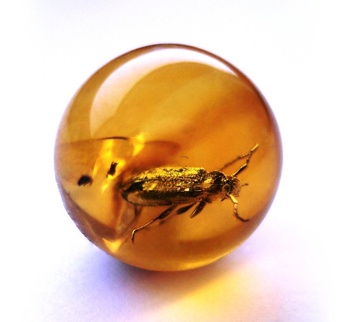 Baltic amber ball - very rare Cerambycidae - body 6 mm