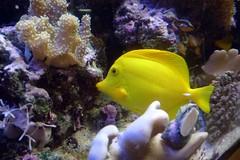 anemone fish(0.0), pomacanthidae(0.0), coral reef(1.0), coral(1.0), fish(1.0), coral reef fish(1.0), organism(1.0), marine biology(1.0), fauna(1.0), freshwater aquarium(1.0), underwater(1.0), reef(1.0), pomacentridae(1.0), sea anemone(1.0),
