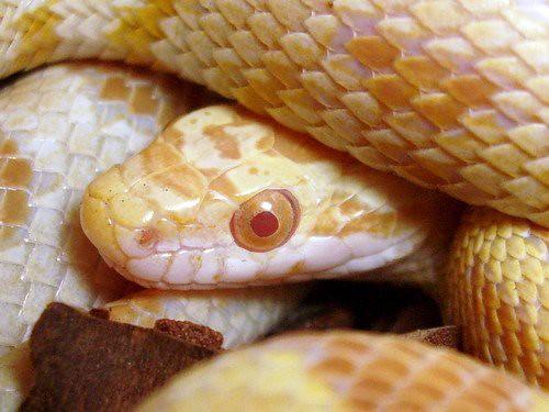 Cobras: como ter uma de estimação - Petlove - O Maior Petshop Online do Brasil