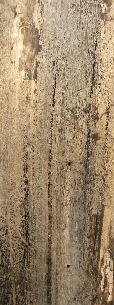 Wooden Skin