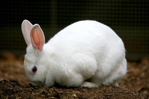 Rabbit - 02