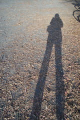 Miss Long-Legs