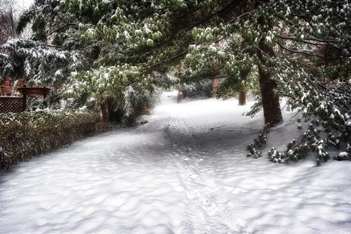 Snowy pathway under tree HDR