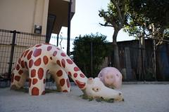 Giraffe and pig