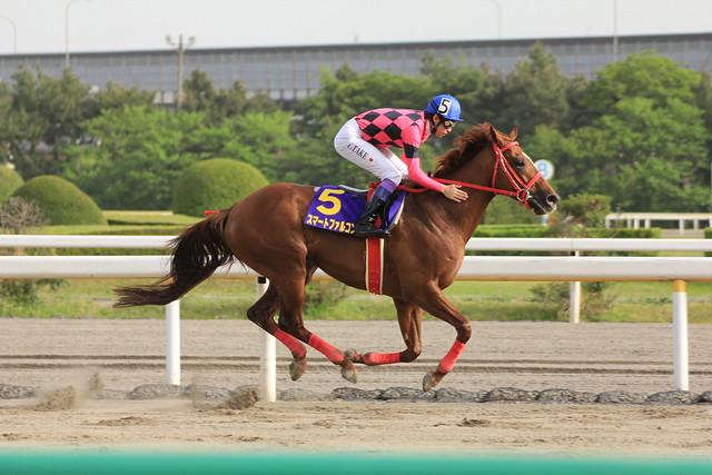 ダイオライト記念勝ち馬 スマートファルコン(武豊)