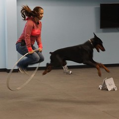 Shannon is giving a #rallyfree demo at the #dfwdogsport Open House - come out and check out all the cool stuff you can do with your dog! #dogsports #dogactivities #dogofinstagram #dogsofinsta #doberman #rallyfree #dogtraining