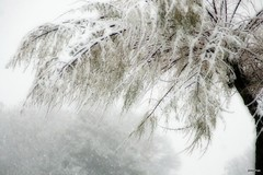 branch, winter, tree, snow, rain and snow mixed, ice, frost, winter storm, blizzard, freezing,