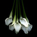 ...TO YOU WITH LOVE, white-callas, the gift