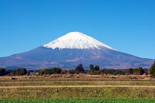 japan mountfuji fujisan farms wasabi gotemba shizuokaprefecture
