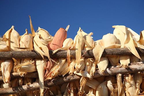 Harvested maize in  Pacassa village, Tete province, Mozambique