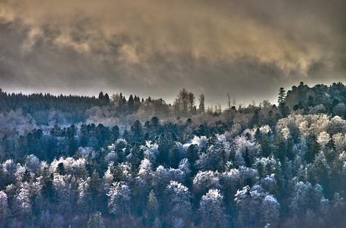 La forêt au dessus des Catagnolles