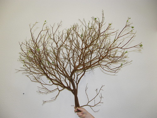 leafless manzanita for sale