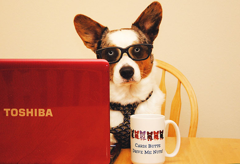 """52 Weeks For Dogs: 51/52 """"Working like a... oh, you know."""""""