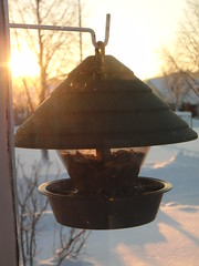 light, bird feeder,