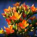 Flores en Conjunto. por Anayaphotography2.0