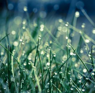 grass. green. blue.