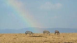 Day 76 - Maasai Mara-17985