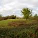La motte féodale - Rue de la Fauconnerie - Blaison-Gohier (49) Maine et Loire - Pays de la Loire // 144.28 - 109 // ©vitruve
