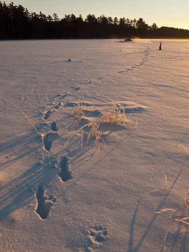 morning trees winter snow cold ice water forest sunrise landscape dawn frozen pond woods footprints nh beaverlodge beaverpond coyoteprints