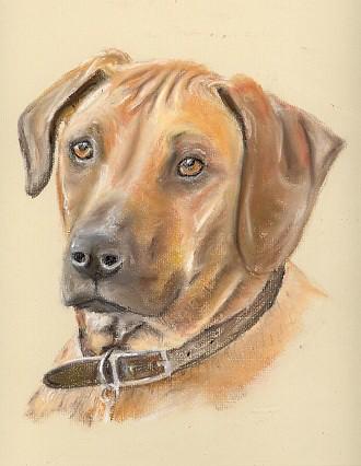 Drawing of a Rhodesian Ridgeback Dog