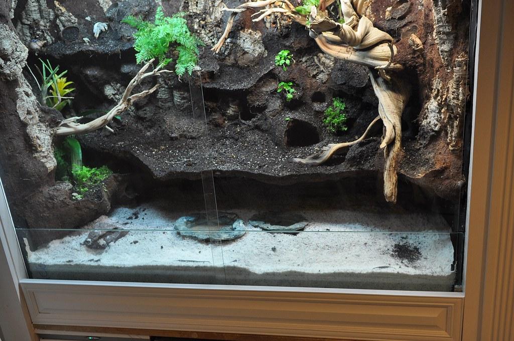 Pet Hermit Crab Habitat Hasshe Com