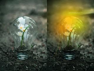 Lightbulb Artwork