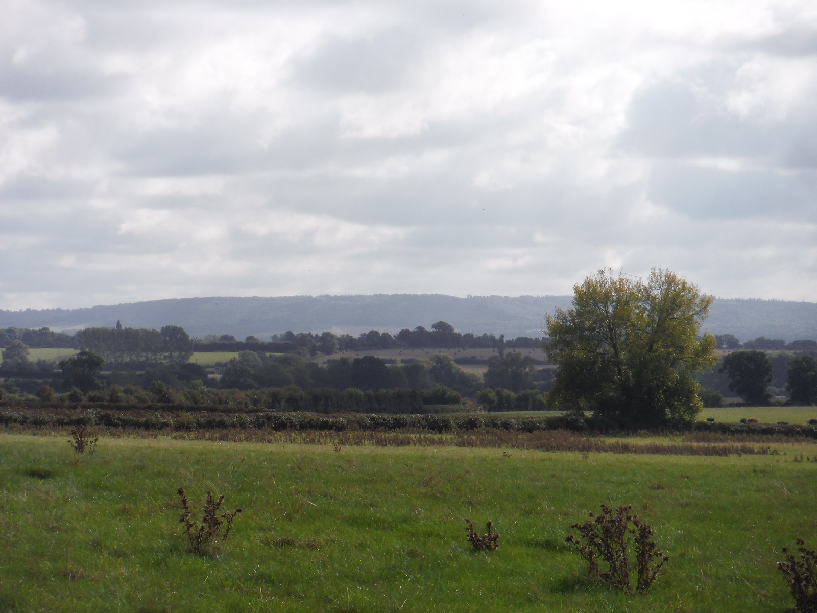 Chiltern Views from just South of Weedon SWC Walk 194 Aylesbury Vale Parkway to Aylesbury