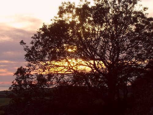sunset tree acres