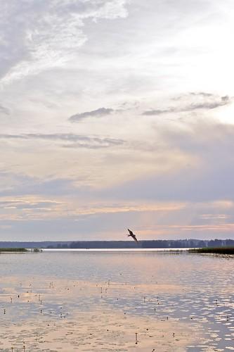 sunset summer lake bird water colors animal finland fuji outdoor m42 fujinon järvenpää tuusulanjärvi tuusula fujinon50mmf14 ebcfujinon